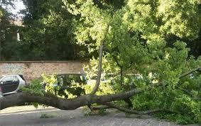 albero-crollo