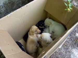 foto-cuccioli-abbandonati